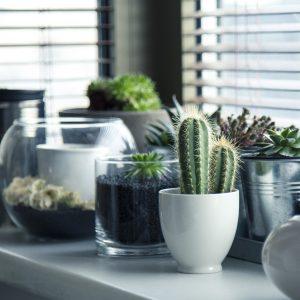 Nya persienner i vardagsrum